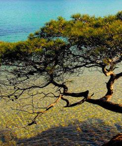 Naturado en Provence